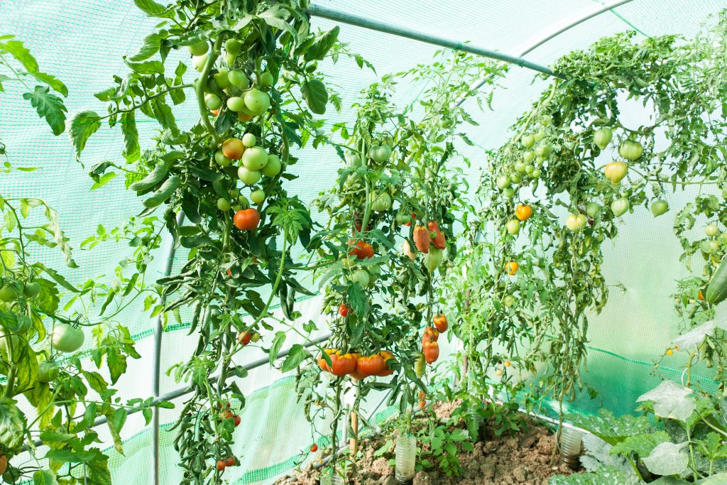 sustainable agriculture with Rhiza Nova