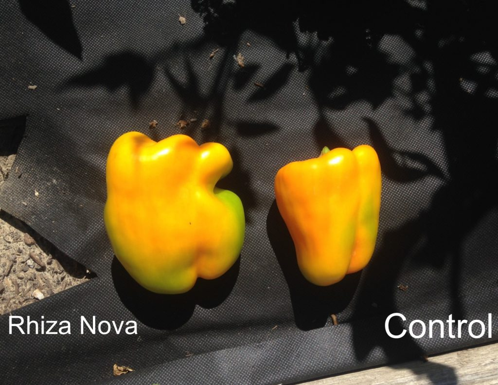 Ameret Peppers